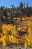 Magnificent autumn in California — Stock Photo
