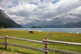 Sleek bay horse — Stock Photo