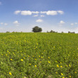 Green spring field with camomiles — Stock Photo #25707707