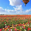Bright balloon flies over field of buttercups. — Stock Photo