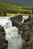 Fur-trees above roaring falls — Stock Photo