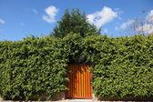 Los setos altos y puerta de madera — Foto de Stock