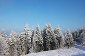 Polanie w lesie zimą — Zdjęcie stockowe