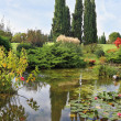 A pond with lilies — Stock Photo