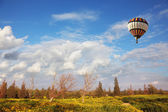 A huge balloon over the blossoming field — Stock Photo