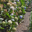 Stock Photo: Flowering shrubs along paths