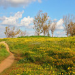 Stock Photo: A dirt road in fields among camomiles