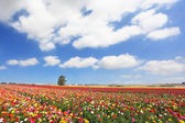Cloudy spring day in Israel — Stock Photo