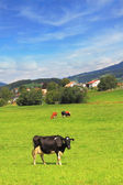 Charming pastoral scene in Southern France — Stock Photo