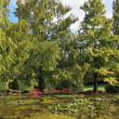 Tree in a quiet pond — Stock Photo