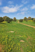 Footpath crosses a meadow — Stock Photo