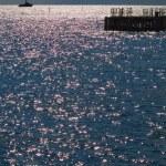 The sea sparkles — Stock Photo #36075313