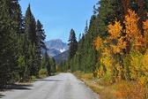 Asphalt road in autumn foliage. — Stockfoto