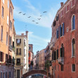 A triangular flock of migratory birds over the Venice — Stock Photo