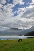 The thoroughbred horse horse on coast of lake — 图库照片
