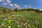 Blossoming spring meadow with bright field flower. — Stock Photo