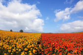 The meadows bright red and yellow flowers — Stock Photo
