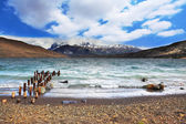 The Lake Laguna Azul — Stock Photo