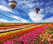 Great rural field with flowers — Stock Photo