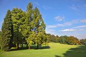 The landscape park — Stock Photo
