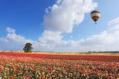 Der ballon fliegt — Stockfoto