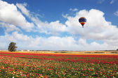 Balloon over blossoming field — Stock Photo