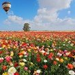 Stock Photo: Spring in Israel