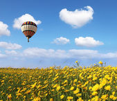 Over the blossoming field of flying a balloon — Stock Photo