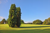 A large cypress trees in park Sigurta — Stock Photo