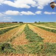Bright balloon over a field of wheat — Stock Photo #42931291
