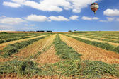 Bright balloon over a field of wheat — Stock Photo