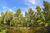 A pond  photographed by Fisheye lens — Stock Photo