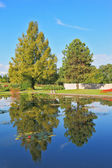 Slender trees are reflected in the pond — Stock Photo