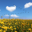 The field of pretty yellow buttercups — Stock Photo