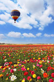 Over the field of flying a balloon — Stock Photo