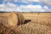 Duże żółte pole po zbiorach — Zdjęcie stockowe