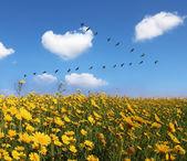 The field of pretty yellow buttercups — Stock Photo