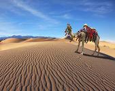 Camel Song — Stock Photo