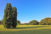 Two slender cypress on a lawn in the park — Stock Photo