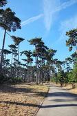 A walking path in the Bois de Boulogne in Paris — Stock Photo