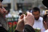 Ortodox Jude väljer rituella växt — Stockfoto