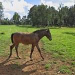 Pension for breeding Arabian horses — Stock Photo #47190217