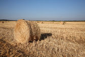 Field after harvesting. Sunset — Stock Photo