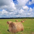 Stack hay on summer field — Stock Photo