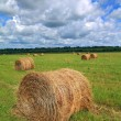 Stack hay on summer field — Stock Photo #12702086