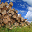 Timber in a field near the forest — Stock Photo