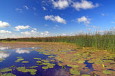 Summer marsh under cloudy sky — Stock Photo