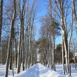 Snow lane in town park — Stock Photo
