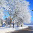 Tree in snow near roads — Stock Photo