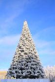 Winter fir tree in town park — Stock Photo